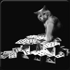 gato destruindo castelo de cartas