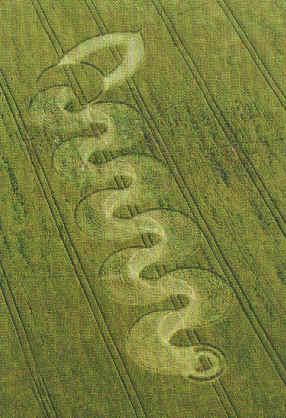 Figura em espiral em plantação