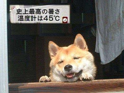 raposa vermelha sorrindo apoiada em uma porta