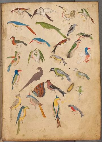 página iluminura com pássaros