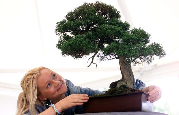 telegraphcouk_bonsai_1120719i
