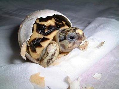 littlecrazymonkeycom_baby_turtle-2