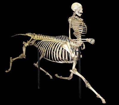 skullsunlimitedcom_skeletonshtm_centaur-md