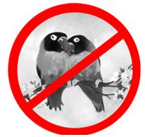 stopbirdpornorg_dont