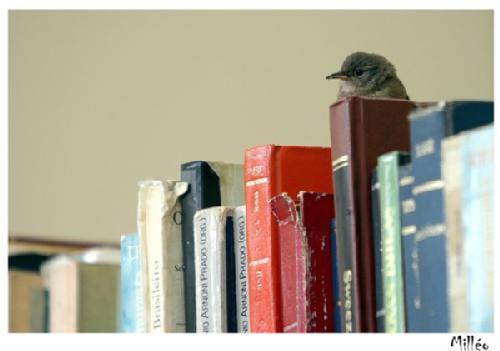 passarinho_na_biblioteca_(at)Dora__cVREv