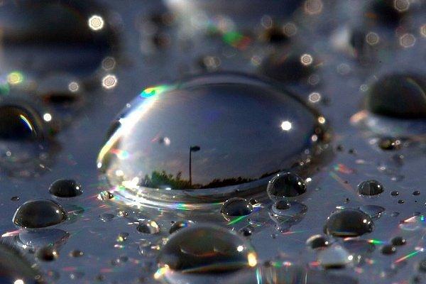 environmentalgraffiti.com_featured_captured-morning-dew_10510_2950459160104237032S600x600Q85