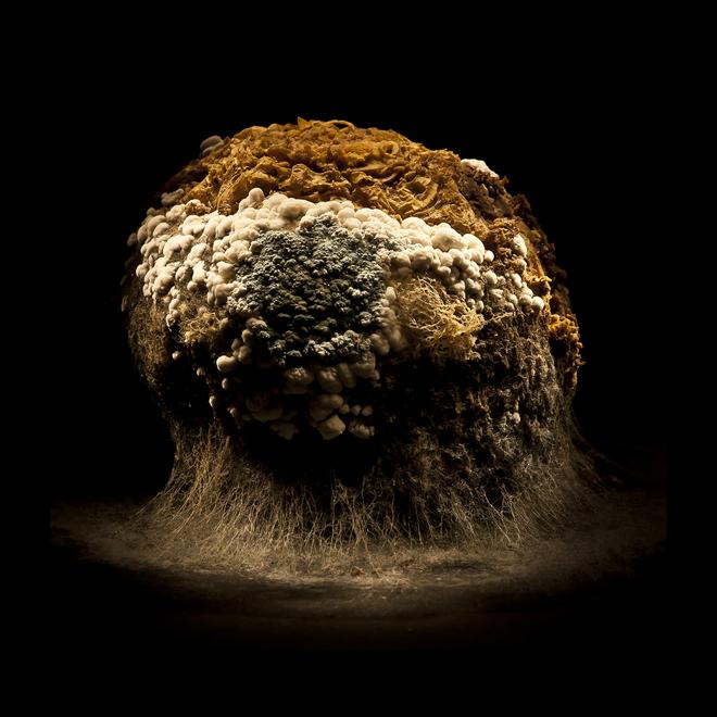 Foto de uma fruta coberta por fungos, parecendo um cogumelo atômico