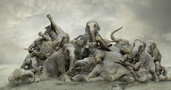 Elefantes amontoados, tentando se levantarem com céu cinza ao fundo