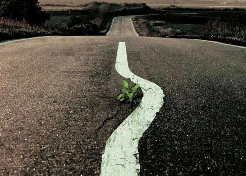 Estrada vazia com plantinha brotando bem no meio e a faixa pintada fazendo um desvio pra nao passar por cima dela