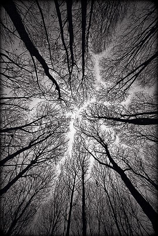 Olhando pra cima numa floresta vendo um caminho de ceu que forma entre as arvores