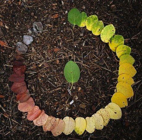 Foto de um círculo de folhas da mesma árvore dispostas em círculo: da mais verde até a folha seca e desfeita de novo em terra