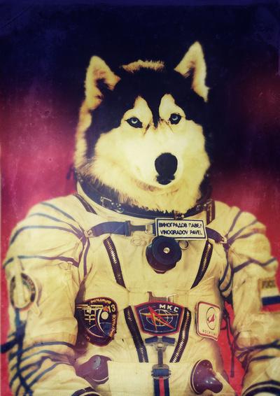 cachorro vestido com roupa de astronauta